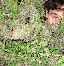 Raccolto e cura dell'erba