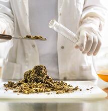 Análisis químico del Cannabis