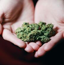 Argentina regulariza la marihuana medicinal