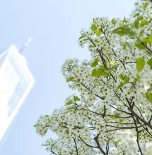 11 Settembre: l'albero sopravvissuto simbolo di speranza