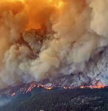 Les fermes de cannabis impactées par les incendies au Canada