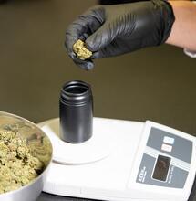 ¿Cómo definir la dosis de la marihuana medicinal?