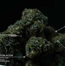 Congreso de Cannabis: Situación actual