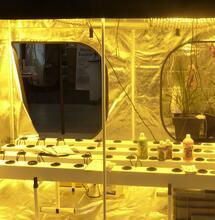 Des employés de growshops relaxés par le tribunal de Versailles