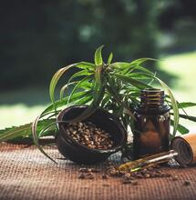 Hacia el uso terapéutico de la marihuana