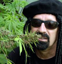 Plantas gigantes de cannabis al estilo gringo