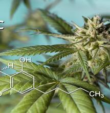 Los distintos cannabinoides de la marihuana