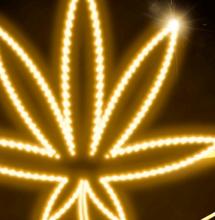 I paradossi della cannabis italiana