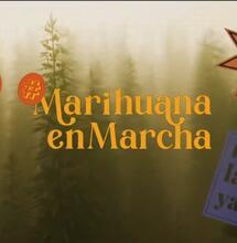 Marihuana-en-marcha