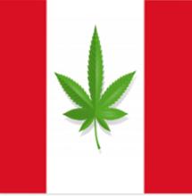 Perù via libera alla coltivazione di Cannabis terapeutica