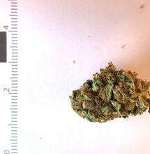Doit-on parler de fleurs ou de fruits de cannabis ?