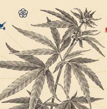 Políticas para el desarrollo sostenible del Cannabis