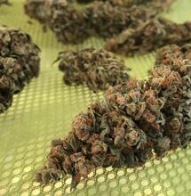 Manicura, secado y curado de la marihuana