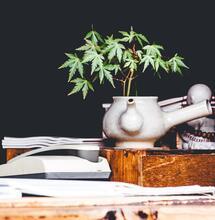 In Parlamento arriva una proposta per la coltivazione domestica