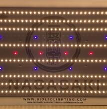 Top consejos indoor by BioLED Lighting