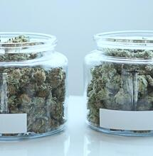 Two jars with samples of lush green cannabis.