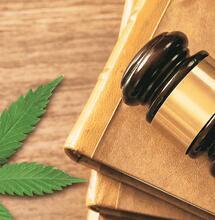 Cannabis leaf next to law documents