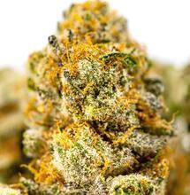 Cómo y cuándo cosechar marihuana