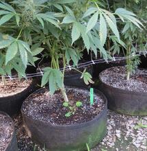 Contenitori grandi per coltivare grandi piante