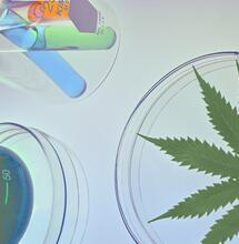 Objeveny nové kanabinoidy THCP a CBDP