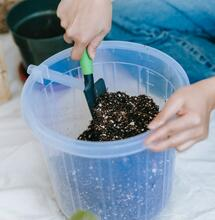 Guano, Natures Best Fertiliser