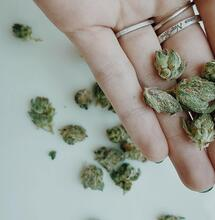 chunks on weed over the palm.