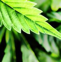 Fotoperiodo: efecto de la luz en las plantas