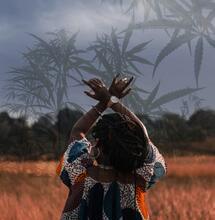 Cannabis: l'oro verde nel continente africano