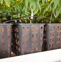 Il vaso giusto per le piante di canapa