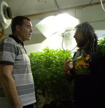 Las raíces españolas de la ola mundial de marihuana CBD y otros nuevos cannabinoides como CBG, CBDV o THCV