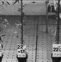 Le phytotron de Gif-sur-Yvette (1960-1986)