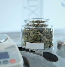 léčebná marihuana v ČR