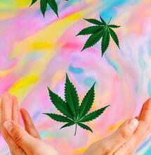 cannabis high.