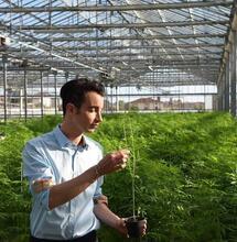 Dalla Toscana arriva la prima insalata alla cannabis, mangiandola ti curi