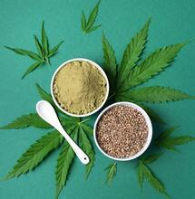 medical cannabis seeds.