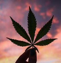 Legalizace marihuany v Mexiku