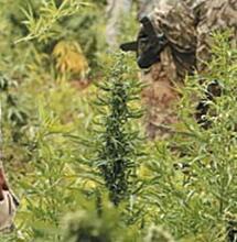 ¿Militarización con la excusa drogas?  No, gracias