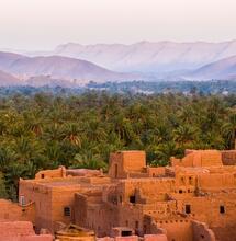 Moderní odrůdy konopí v Maroku vytlačují původní genetiku