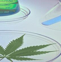 ¿Qué es y Cómo Funciona el Sistema Endocannabinoide?