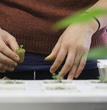 Different Ways Growing Weed: Outdoors vs. Indoors, Soil vs. Hydroponics vs. Aquaponics