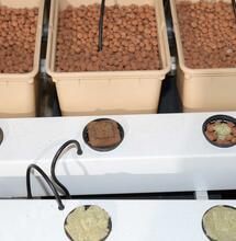 Quel est le meilleur choix avant la récolte: arrêter la fertilisation en avance ou rincer le substrat ?