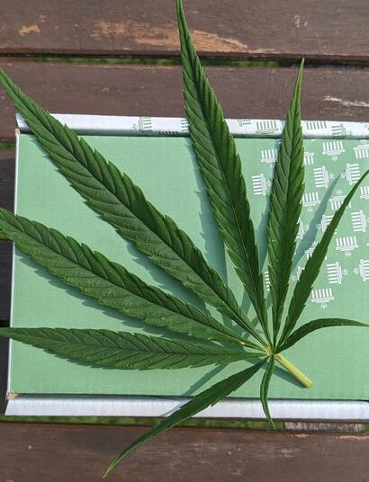 cannabis leaf alongside a green package.