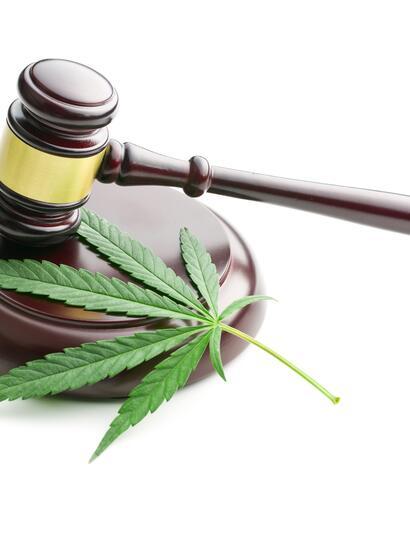 cannabis leaf on hammerblock