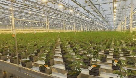 La première livraison d'Aurora Cannabis pour l'expérimentation du cannabis médical