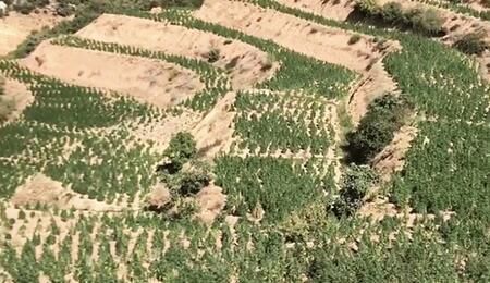 Maroc : le projet de loi pour la légalisation du cannabis médical adopté par le Conseil de gouvernement