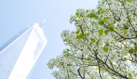 Survivor Tree Bloom