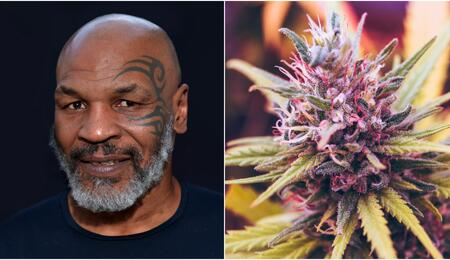 Mike Tyson cannabis industry.
