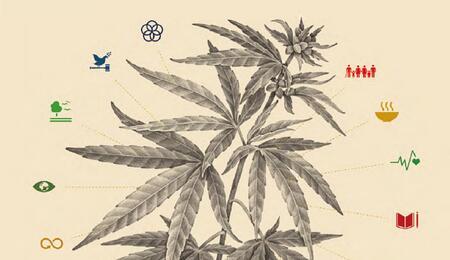 Politicas-Cannabis
