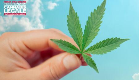 Italie : lancement d'un référendum sur le cannabis