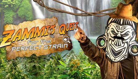 Zammi's Quest